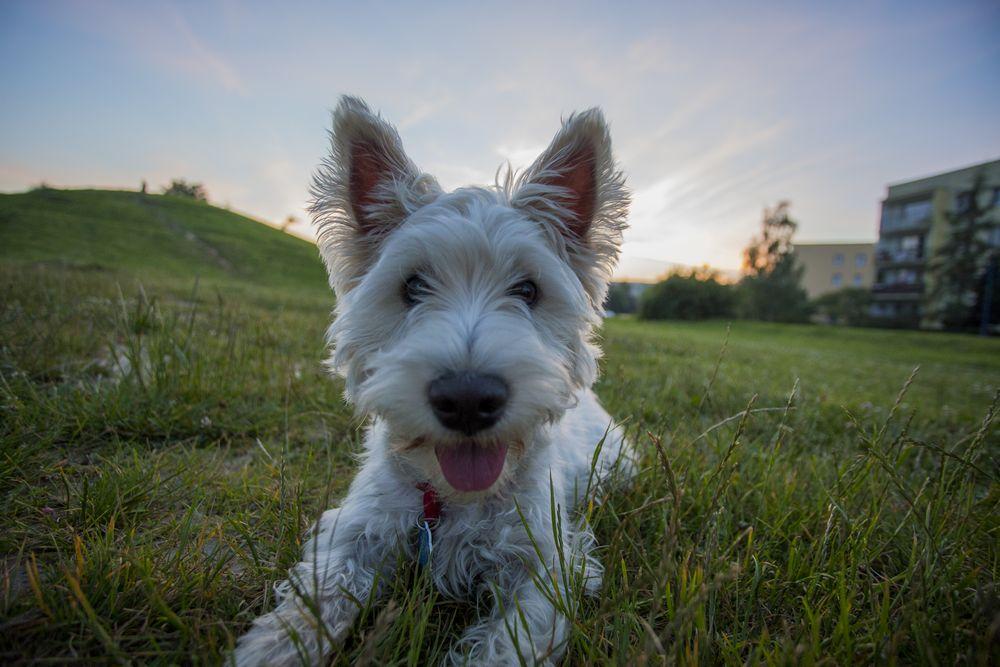 Minnaar The Dog na trasie fourcross'owej